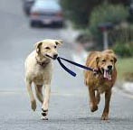 Dogs walking together